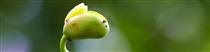 IEC news11 دستاورد جدید زیست محیطی با ایزو 14001:2015